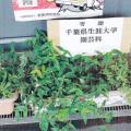 東総学園 園芸自主講座 サークル活動紹介の写真