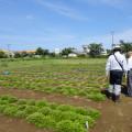 芝桜(東庄町ふれあいセンター)の写真
