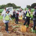 学生自治会による大利根旭出福祉園芋ほり会ボランティアの写真