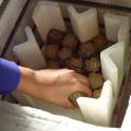 """中学校での陶芸サポートボランティア 2(素焼編・サポート研究編) 「感謝の気持ちを""""桜""""にのせて―卒業生に贈る陶箸置きの制作―」の写真"""