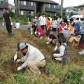 南房学園園芸自主講座による地域交流 ーさつま芋掘り体験ーの写真