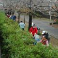 京葉学園 千葉市緑区おゆみ野の街路整備ボランティアの写真